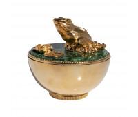 Malachite box Frog